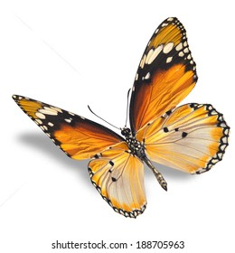 Beautiful orange butterfly flying isolated on white background