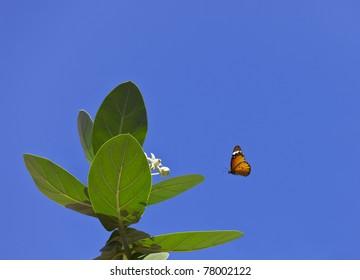 A beautiful orange butterfly heading towards a flower