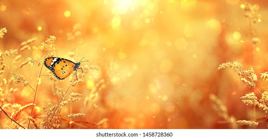 Beautiful orange butterfly on golden field meadow grass, in sunset rays, nature summer landscape, close up macro. gentle pastoral rural artistic image. summer or autumn season. copy space.