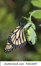 Beautiful orange butterfly on green background
