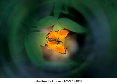 Beautiful orange butterfly photographed close-up on a green sheet