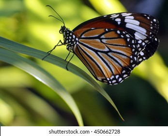 A beautiful orange color butterfly on a leaf with selective focus