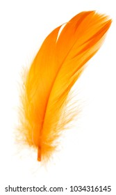 Beautiful orange feather on white background