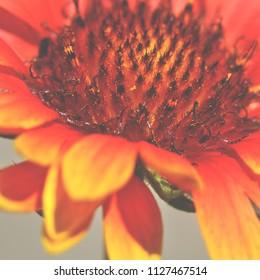 Beautiful orange flower close up
