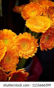 Beautiful orange flowers