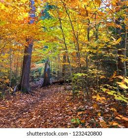 Beautiful orange and green leaves falling in upper peninsula of Michigan