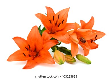 Beautiful orange lily flower bouquet isolated on white background