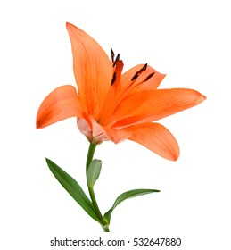 Beautiful orange lily flower bouquet isolated on white