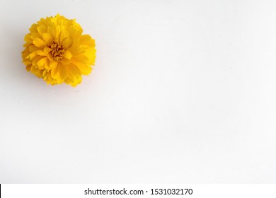 beautiful orange marigold flower isolated 260nw