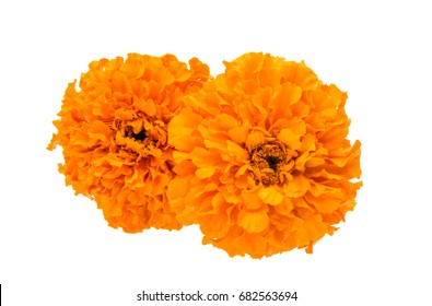 Beautiful orange marigold flower isolated on white background
