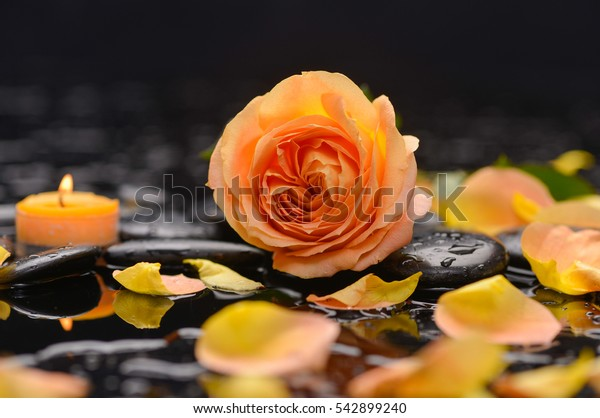 Beautiful orange rose with candle and therapy stones