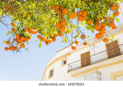A beautiful orange tree with a building in the backround in Tarifa,Andalucia,Spain