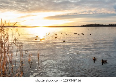 Beautiful orange winter landscape sunset over calm water with mallard duck birds at sea.