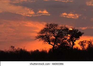Beautiful orange winter Sunrise in Elephant Plains nature reserve