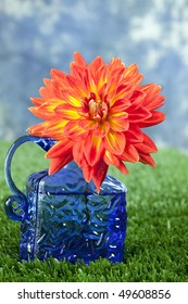 Beautiful orange and yellow dahlia in cobalt blue bottle sitting in grass in front of blue sky