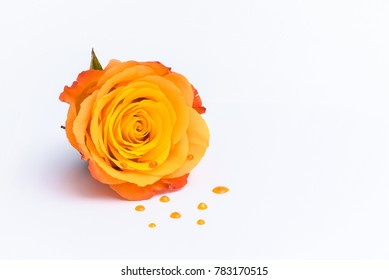 Beautiful orangy rose with orange drops isolated on a white background