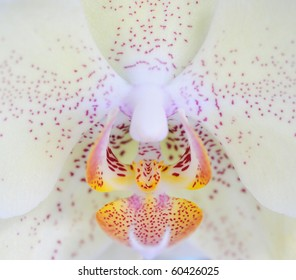 Beautiful Orchid Close Up