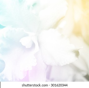 beautiful orchid flower background process with in color tone