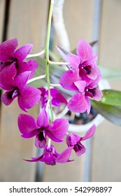 beautiful orchid flower bright violet or purple color petals with green leaves on blurred background, closeup