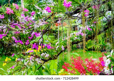 Beautiful orchid flower and green leaves background in the garden .Colorful of orchid flower at garden Thailand