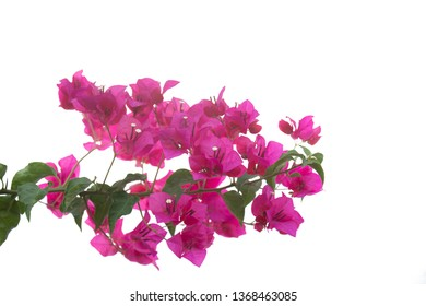 Beautiful orchid flower isolated on white background.Clipping path.