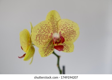 Beautiful orchid flower isolated on white background