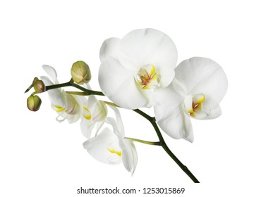White Orchid Flower Images Stock Photos Vectors Shutterstock