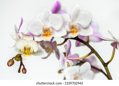 Beautiful orchid flower on white background.