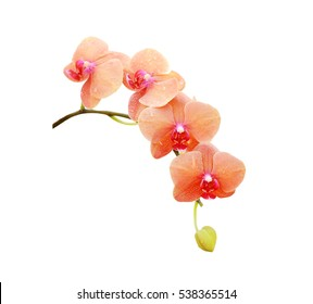 Beautiful orchid isolate on white background.