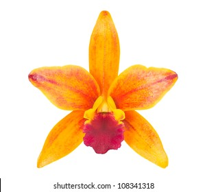 beautiful orchid isolated on white background