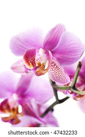 Beautiful Orchid over white
