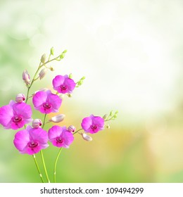Beautiful orchid phalaenopsis background border collection