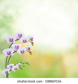 Beautiful orchid - phalaenopsis border collection