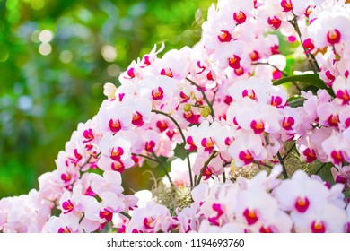 Beautiful orchid pink and white.