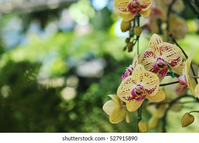 Beautiful orchid is queen of flowers