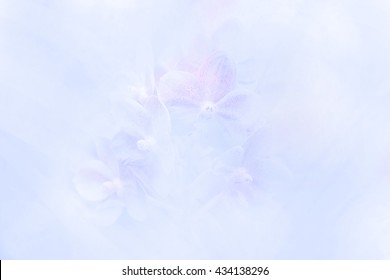 Beautiful orchid in sweet colors soft blur background