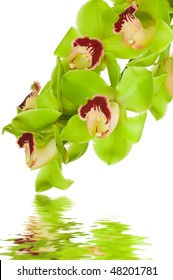 Beautiful Orchid in water isolated on white background