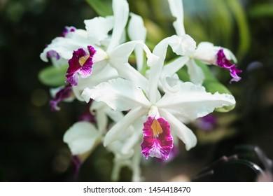 beautiful orchidea in orangerea close up macro shot