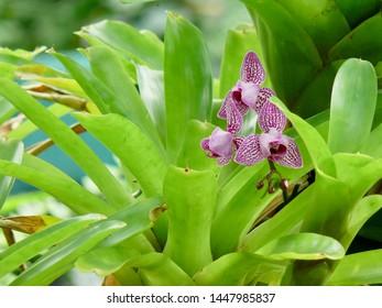 Beautiful orchids Kuranda Butterfly House