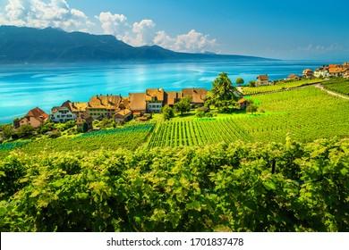 Beautiful orderly terraced vineyard with Lake Geneva in background. Green vineyards and vine plantation in Lavaux wine region, near Chexbres village, Rivaz, Canton of Vaud, Switzerland, Europe