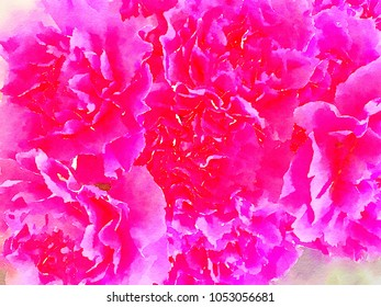 beautiful original painting of Pink Carnations