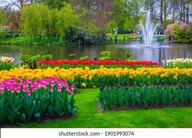 Beautiful ornamental flowery plantation with colorful various tulips and spring flowers, Keukenhof garden, Netherlands, Europe