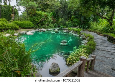 beautiful outdoor garden green pond and bridge stone with tree