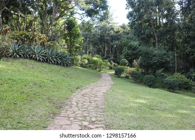 Beautiful outdoor stone pathway disappearing into the distance as the grass grows around, giving a green and nature-like feeling