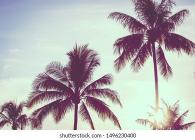 Beautiful outdoor tropical nature with coconut palm tree leaf on blue sky background