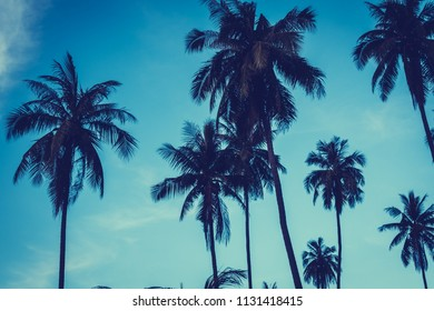 Beautiful outdoor view with tropical nature and silhouette coconut palm tree on the sky at sunset time - Vintage Filter