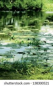 Beautiful overgrown lake in Belarus