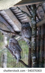 Beautiful owls in the park
