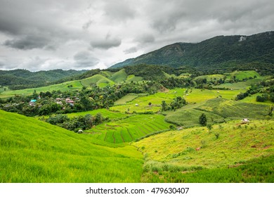 Beautiful paddy fields in Thailand at Ban Pa Pong Pieng in Mae chaem, Chaing Mai.