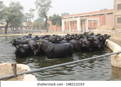 Pakistan Farming Images, Stock Photos & Vectors | Shutterstock